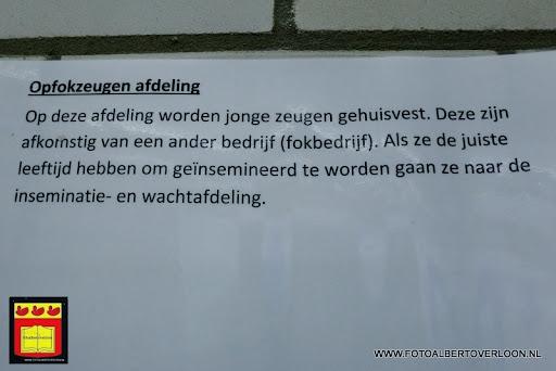 Open dag varkensbedrijf molenpas overloon 29-06-2013 (4).JPG