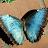 sharie s avatar image