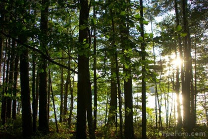 Federparchi, Kyoto Club e Legambiente su giornata internazionale foreste