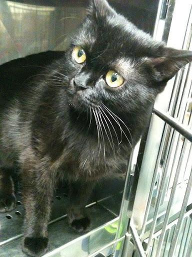 3 gatitos de 2 meses y mami de 1 año dejados en clinica (en Vitoria) ¡ADOPTADOS! IMG_1718