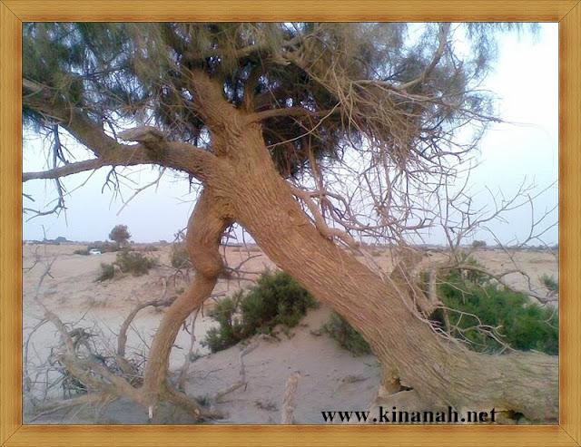 مواطن قبيلة الشقفة (الشقيفي الكناني) الماضي t8197-18.jpeg