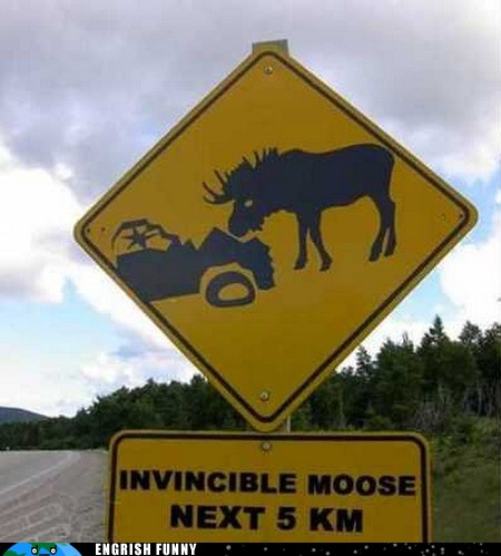 photo of a beware of invincible moose road sign