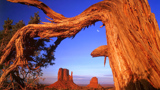 Fallen, Monument Valley, Arizona.jpg