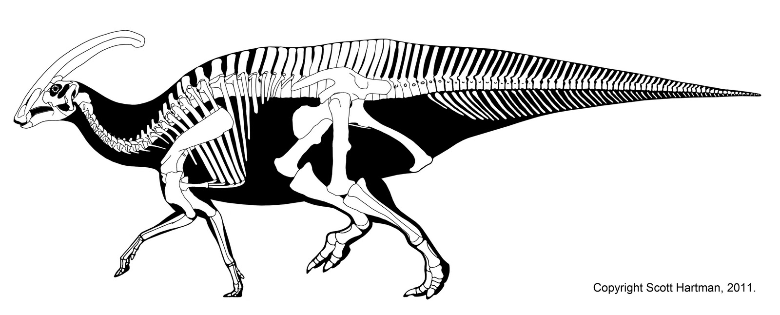 A History of Skeletal Drawings: Part 3 - Dino Renaissance to the ...