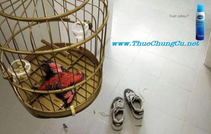 Chân hôi đến chim bịt mũi mà vẫn bị chết ngạt