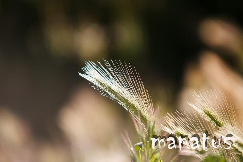 manatus foto blog flora