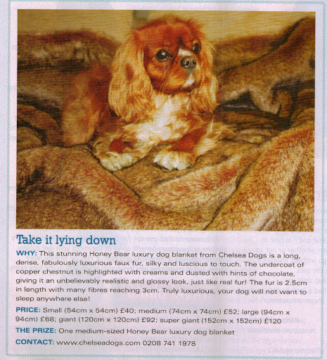Chelsea Dogs featured in Dogs Today Magazine I Want One Prize Giveaway September 2012 Issue