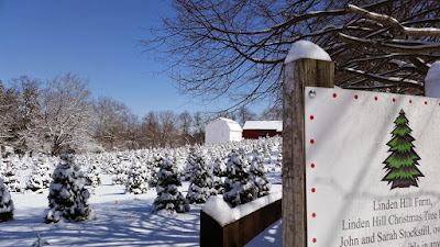Linden Hill Christmas Tree Farm