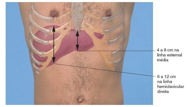 Hepatimetria normal. Propedêutica médica. Battes, 11°ed.