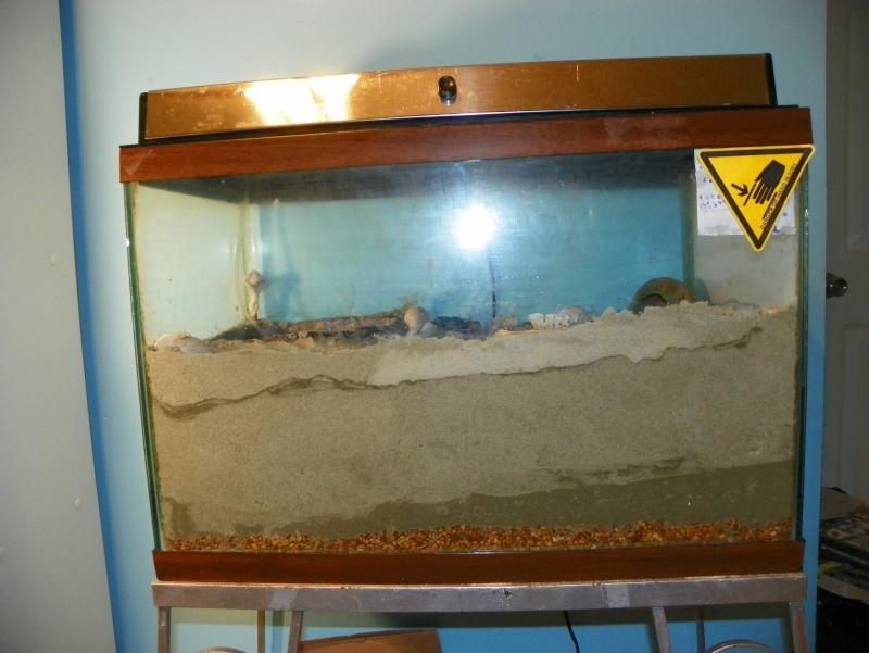 Pinchey, my sand crab 102_0214