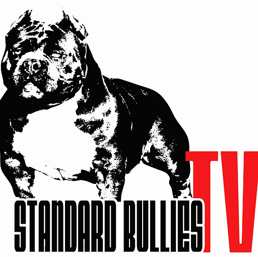 American Bully Drawing Related Keywords - American Bully ...