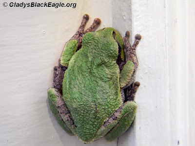 Treefrogs have tiny suction cups at the end of each toe to help them grip surfaces.