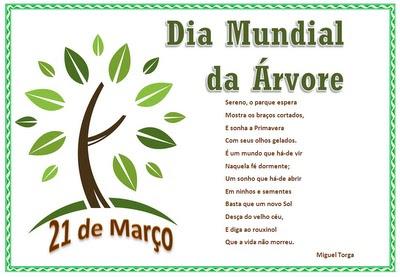 Dia Mundial Da árvore Porto Novo