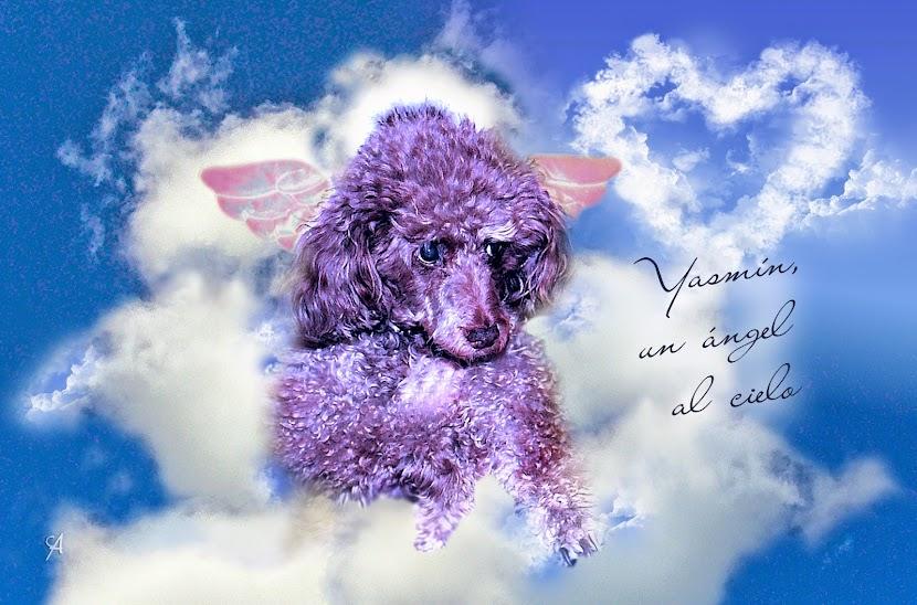 Yasmín, un ángel al cielo