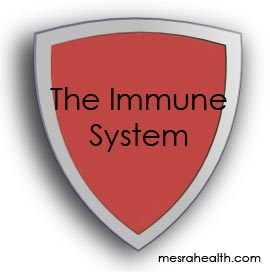 The Immune System Eating to Support a Healthy Immune System