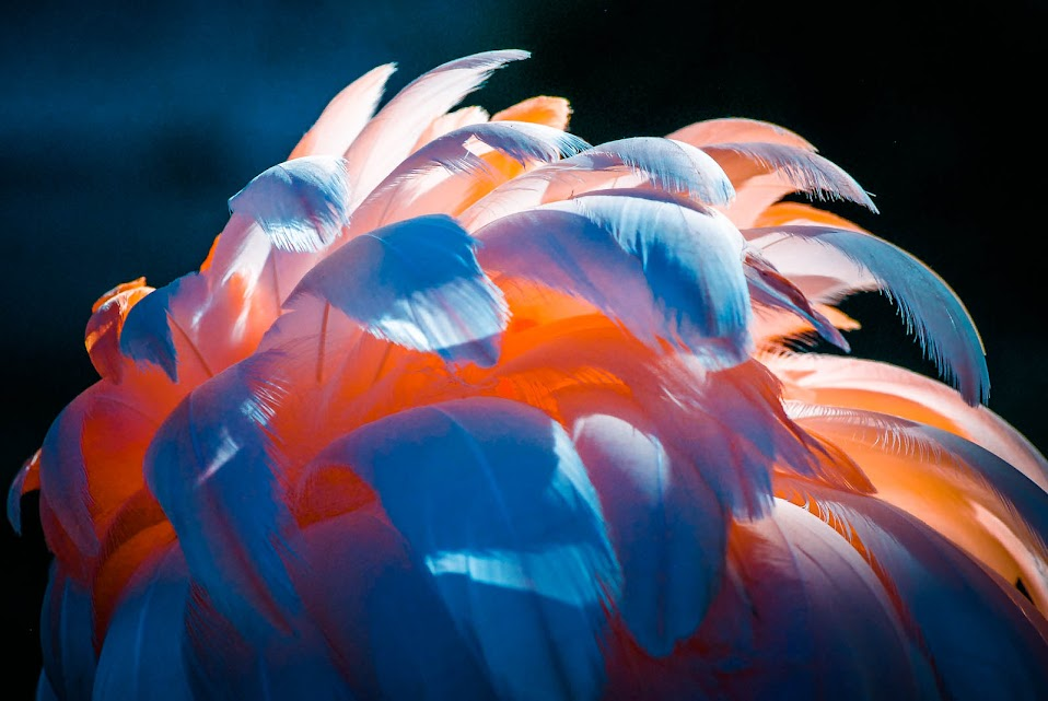 nature photography, colorful feathers, animal kingdom, light impressions, close-up