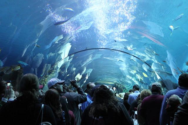 Visiting The Georgia Aquarium This Is My South