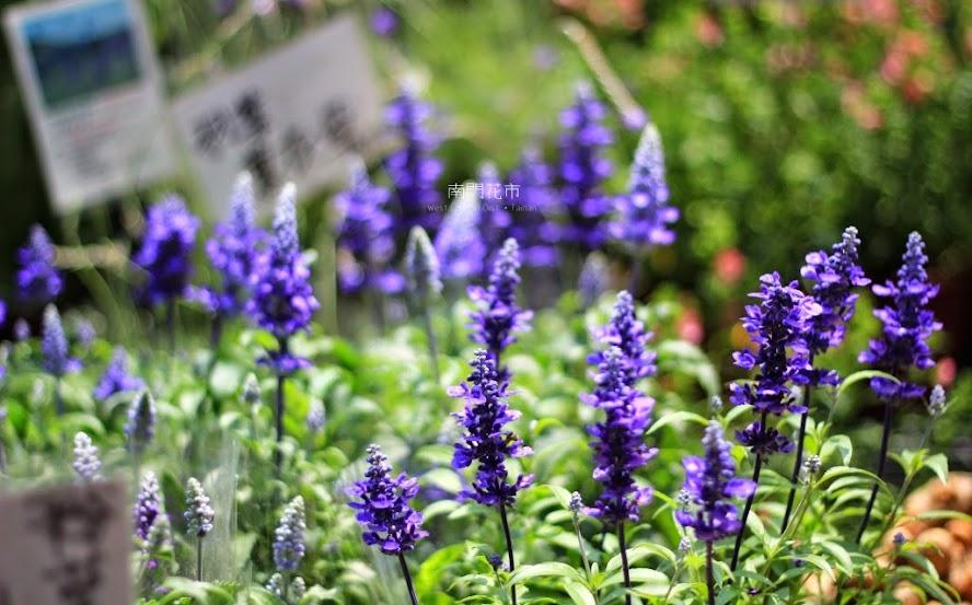 台南中西區景點,南門花市-8