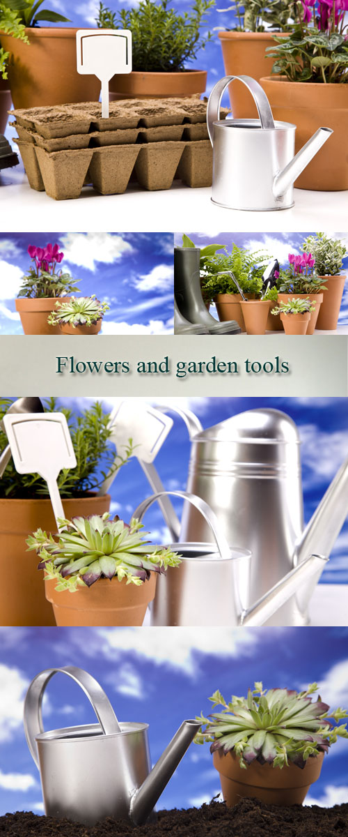 Stock Photo: Flowers and garden tools on sky background