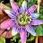 Jackie Falk avatar image