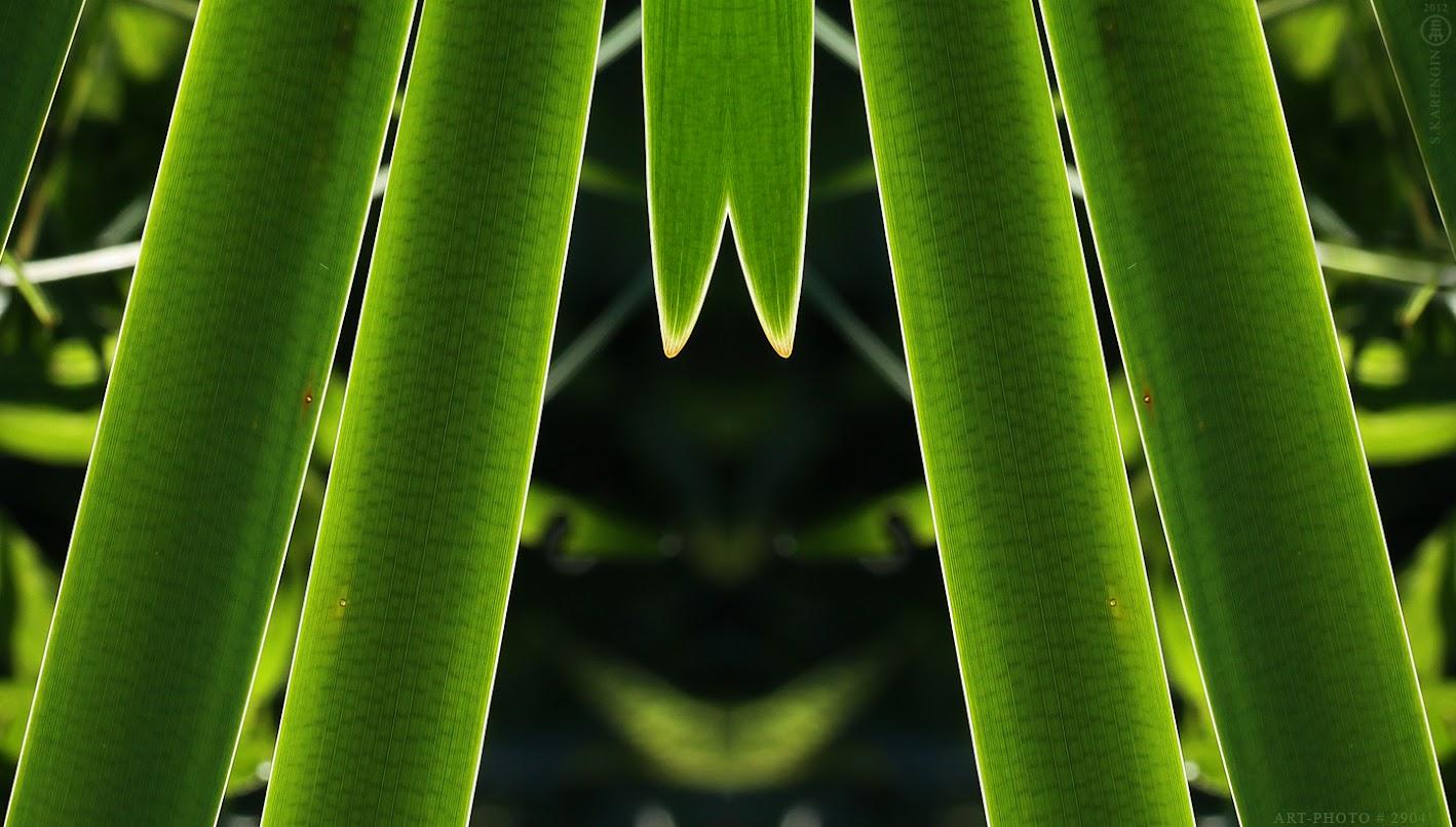 дух джунглей, фото-арт, jungle spirit, art photography