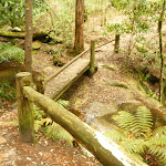 Timber footbridge and railing at the dammed pool in the Watagans (322163)