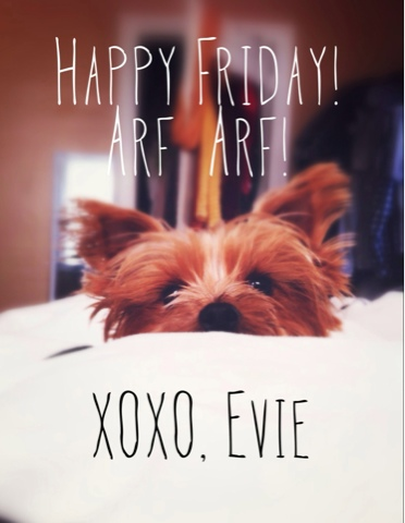 Happy Friday from our Yorkie! | brewedtogether.com