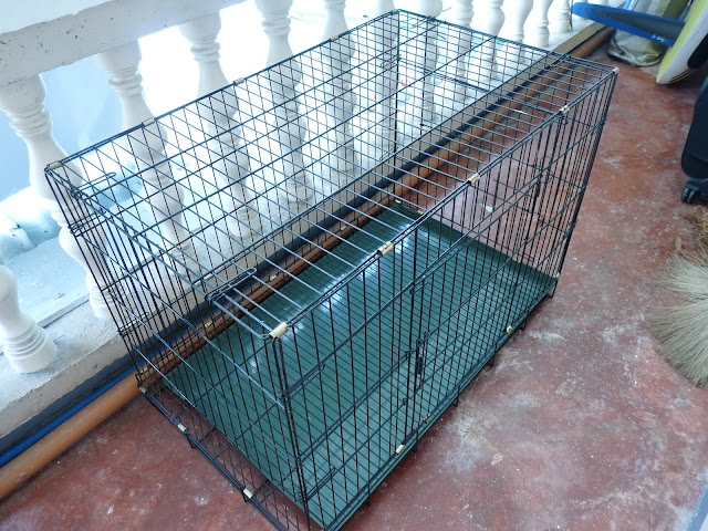 P1180845 - For Sale:  Fold Down Dog Crate - Free Advertisement