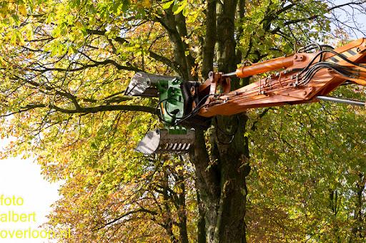 Bomen gekapt Museumlaan in overloon 20-10-2014 (9).jpg