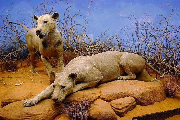 Sombra e Escuridão Os Leões mais Famosos