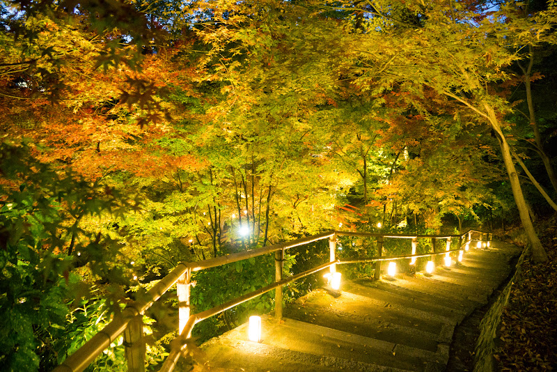 京都 紅葉 北野天満宮 ライトアップ 写真1