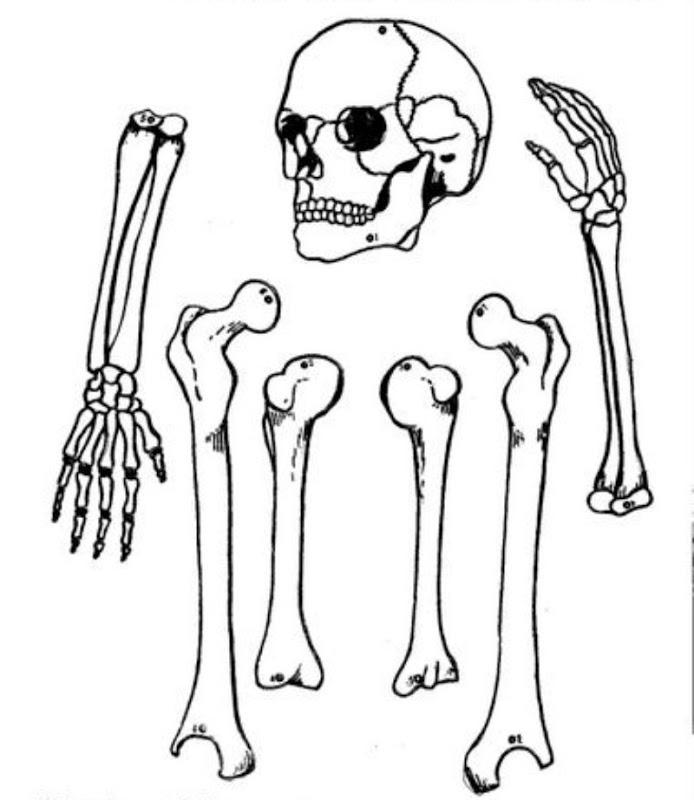 Pinto Dibujos: Esqueleto calavera armable para colorear