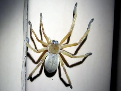 A huge spider!