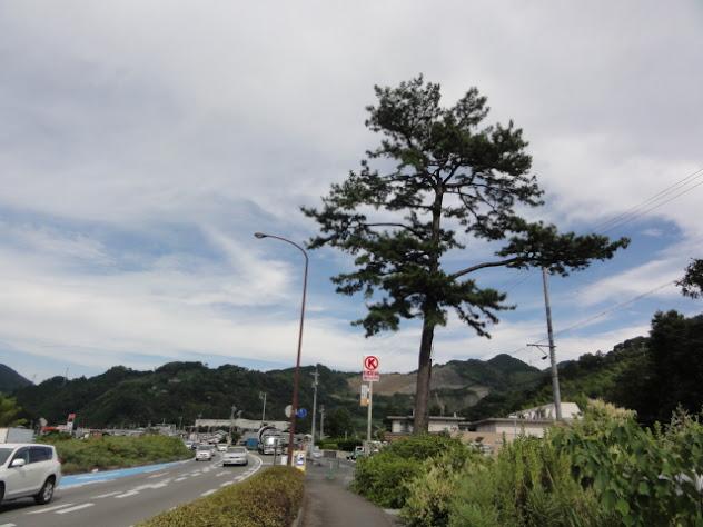 名残の松 東海道五十三次