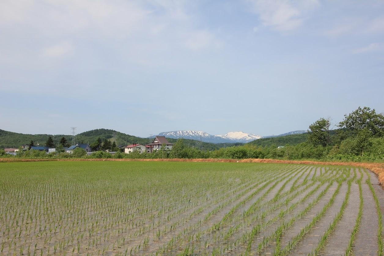 新緑と暑寒岳1
