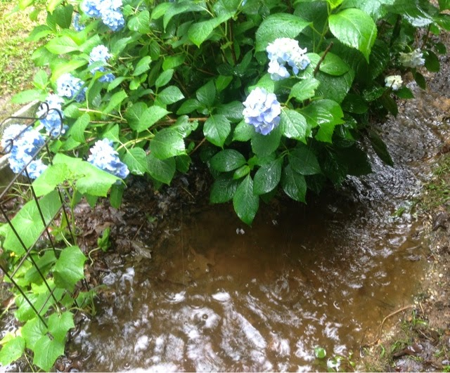 flower garden in rain