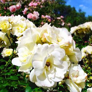 Jardin de las rosas, Hyde Park