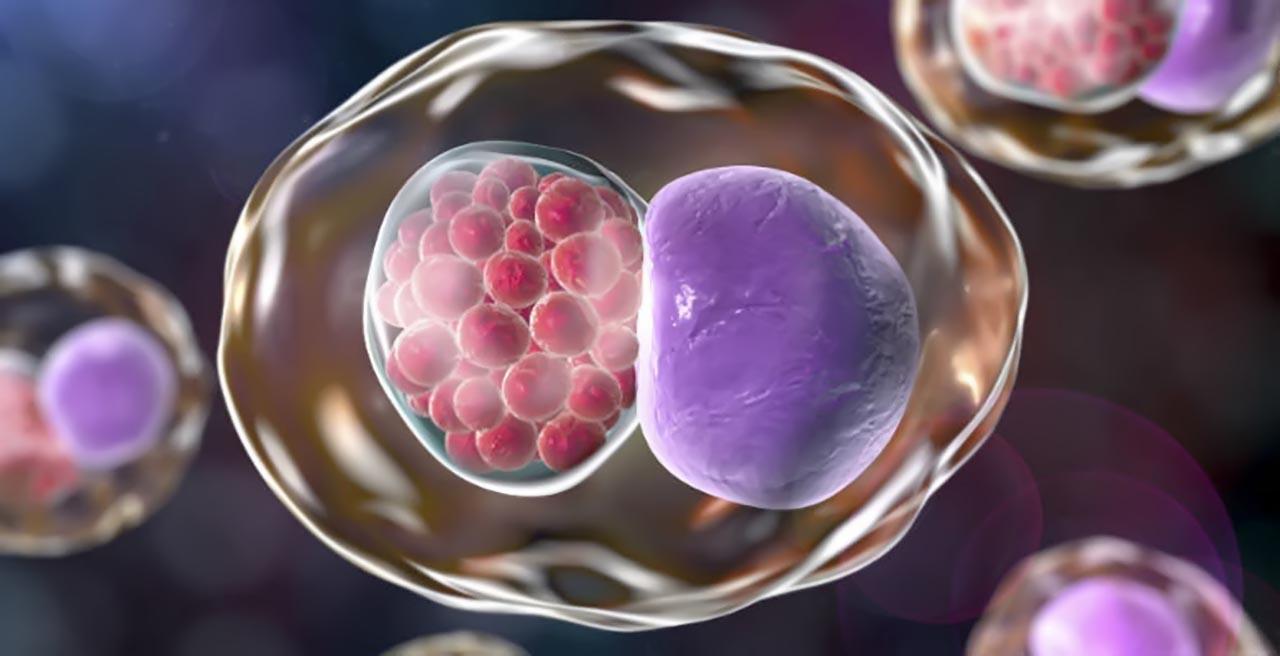 Hình ảnh minh họa Chlamydia trachomatis