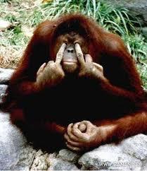 Orangutangas apie kosmetiką