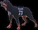 Locação de Cães em São Paulo | Canil Dog K9