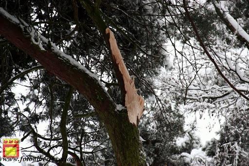 eerste sneeuwval in overloon 07-12-2012  (50).JPG