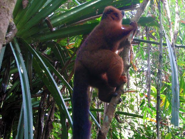 صور من مدغشقر Madagascar 14867486124