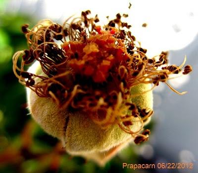 rose1001.jpg