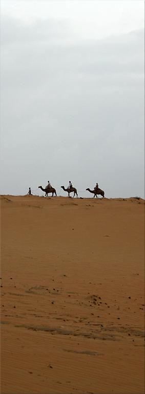 Paseo en dromedario - Desierto de Lompoul