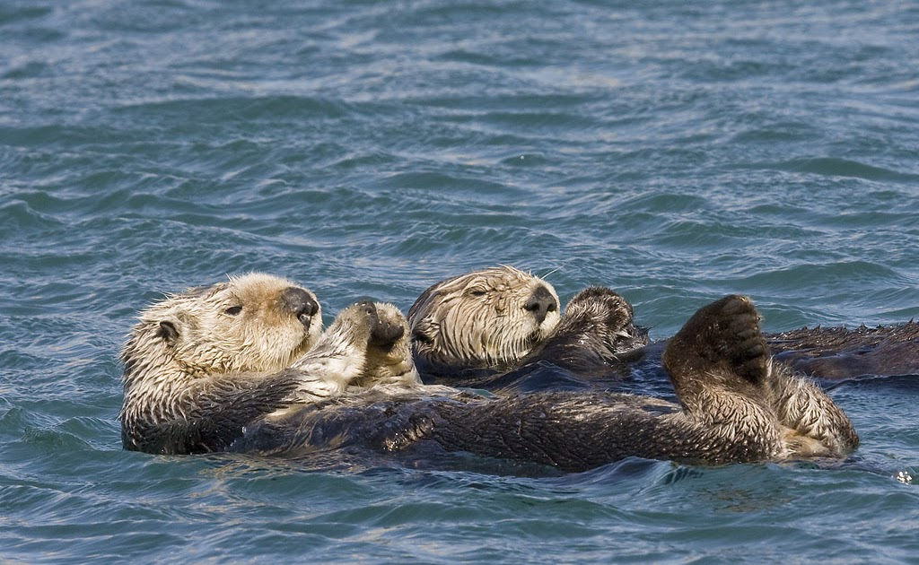 Lontre marine che fanno il bagno immagini e sfondi per ogni momento - Donne che fanno il bagno ...