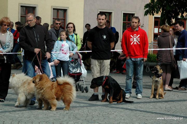 Atari Toro Negro na majówce z innymi psami