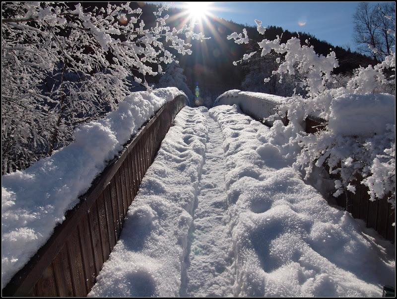 Un petit résumé de l'hiver... P1179246
