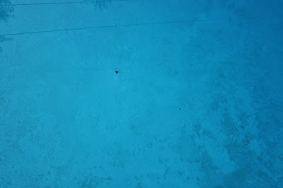 New Pool Owner Finished Slam Now On To Stain Id Removal