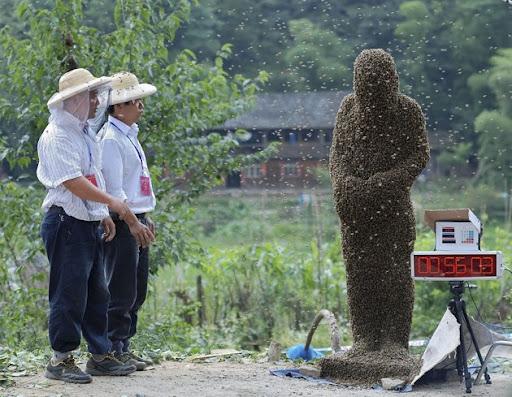 Kontes Selimut Lebah