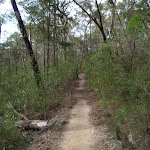 Track up to Red Hands Cave picnic area (145440)